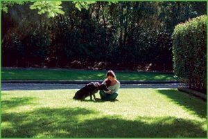 Lawn Self Repair