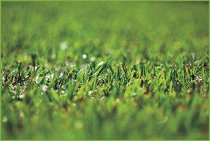 Closeup Lawn