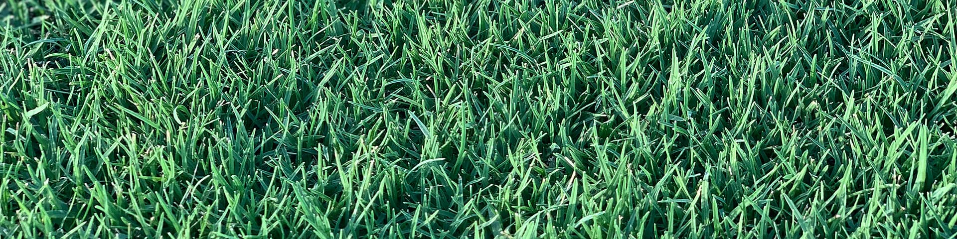 WE GROW + SUPPLY THE BEST TURF FOR <span>NORTH QUEENSLAND</span>