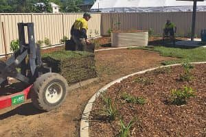Lawn Turf Care Cairns
