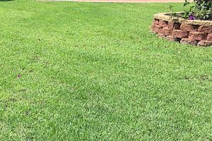 Cairns Lawn Support Videos