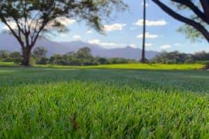 Harden Park Lawns