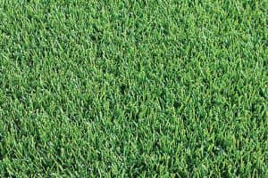Platinum Zoysia Turf Lawn Cairns Supplier